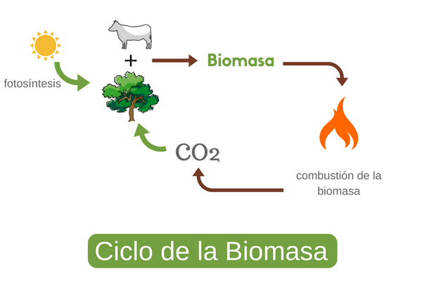 ciclo de la biomasa