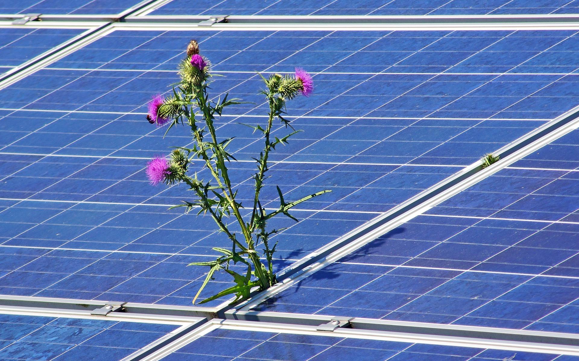Photovoltaic Panels DEXMA
